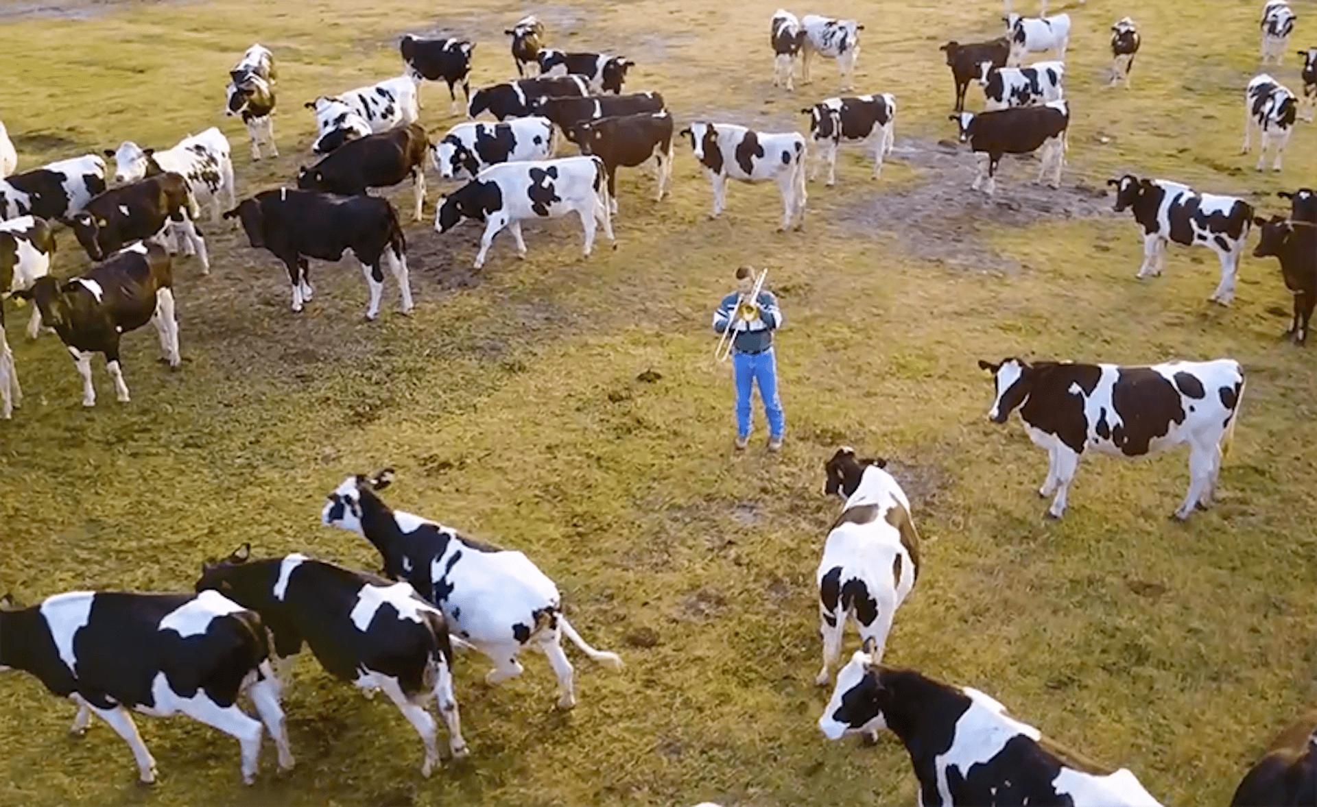 牛のためだけに吹くJAZZ。牧場に響くトロンボーンと、寄り添い集まって聴く大群の牛