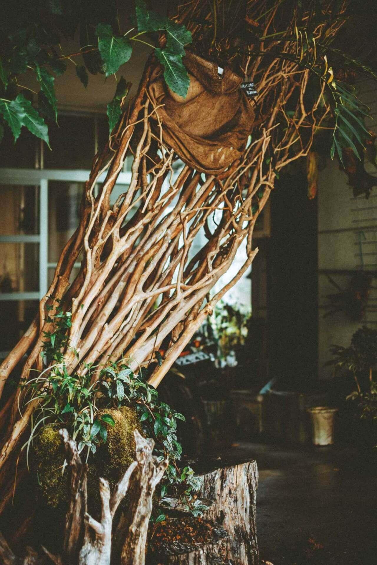 art200925_planb-master-piece_35 ビザールプランツのパイオニア西畠勲造にフォーカスした展示が開催中