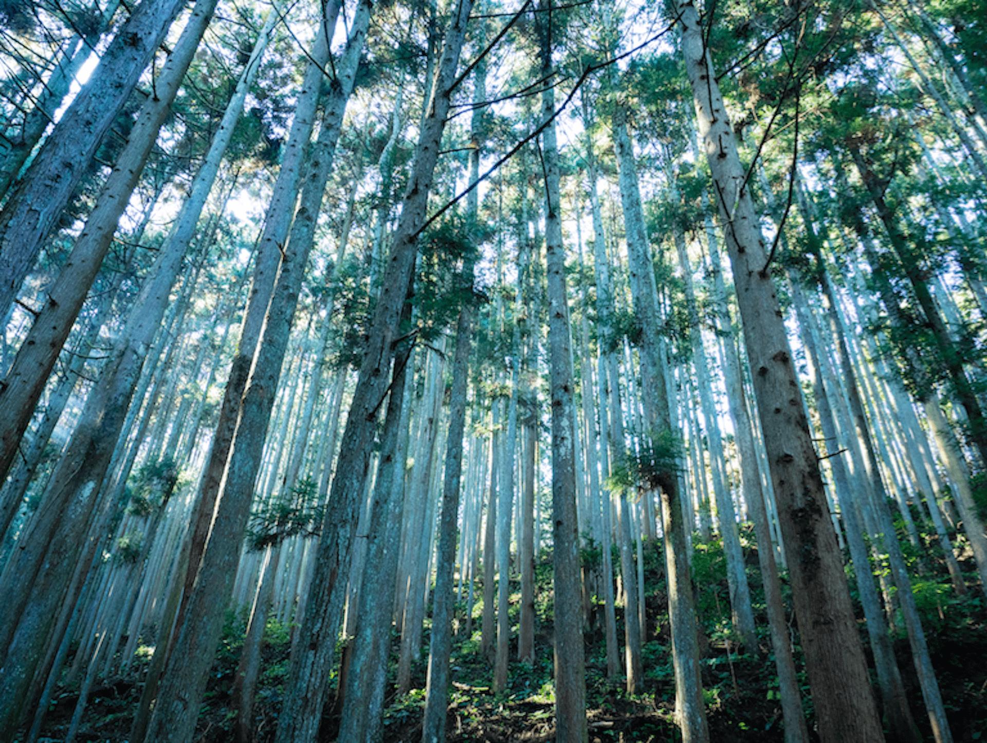 sub7-1920x1445 開催間近!奈良の自然に包まれた芸術祭、ライゾマ齋藤精一がプロデュースする<MIND TRAIL 奥大和 心のなかの美術館>